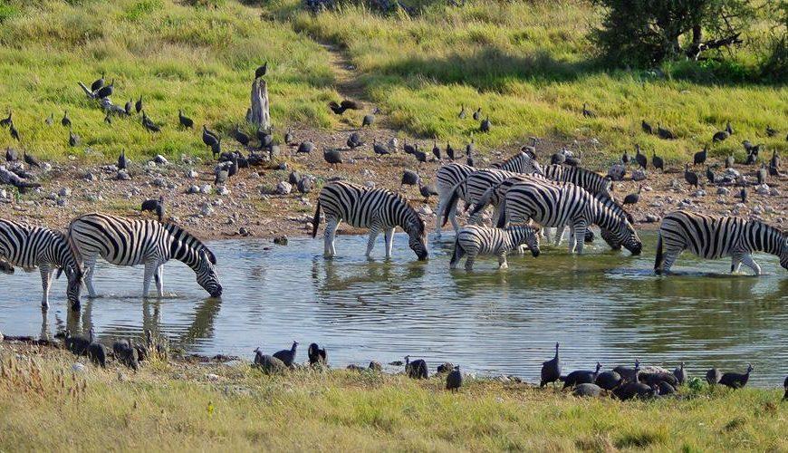 Namibia 4 Stars Safari